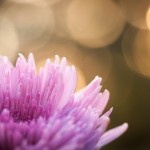 flower atma